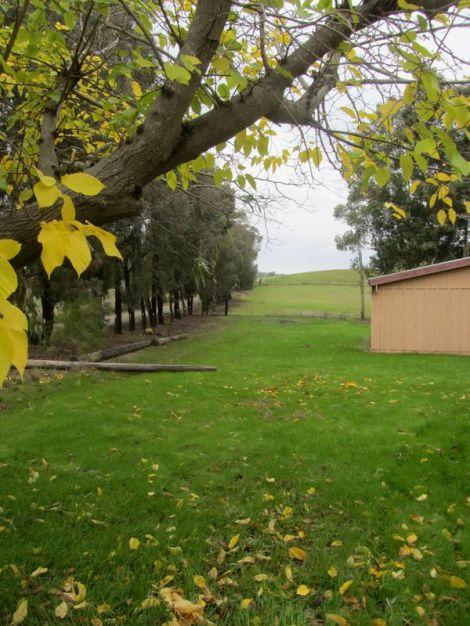 green side yard