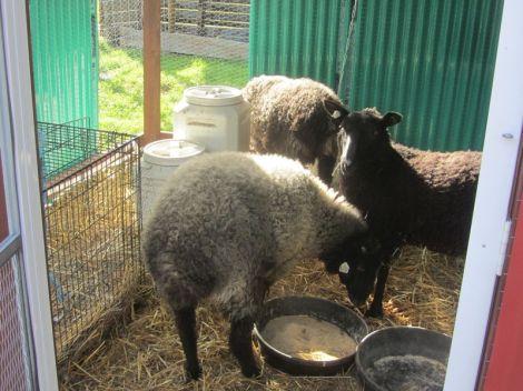 in guinea coop