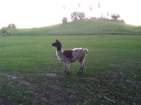 in pasture