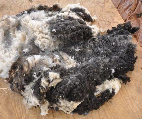 jacob fleece