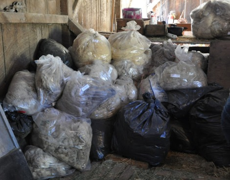 Fleeces at Forest Home Farms in San Ramon