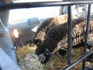 Heddy and Hazel eating in van