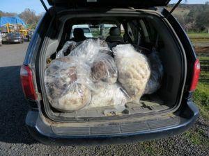 fleeces in van