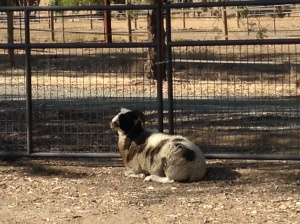 """""""I know there is a way to get through this gate - I just need more time to figure it out."""""""