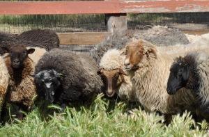 group in fleece