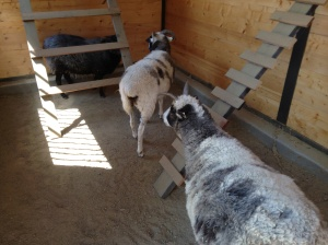 nellie and lily help eve inspect inside