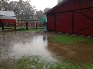 wet-barnyard